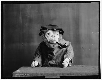 1905 Photography - Bulldogs in Fancy Dress